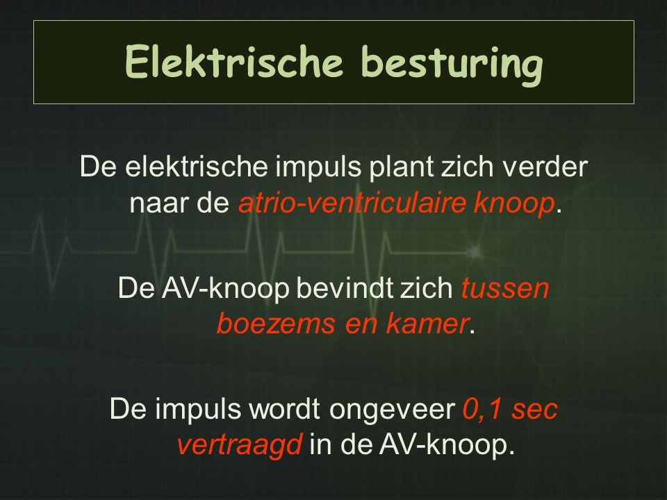 Elektrische besturing De elektrische impuls plant zich verder naar de atrio-ventriculaire knoop. De AV-knoop bevindt zich tussen boezems en kamer. De