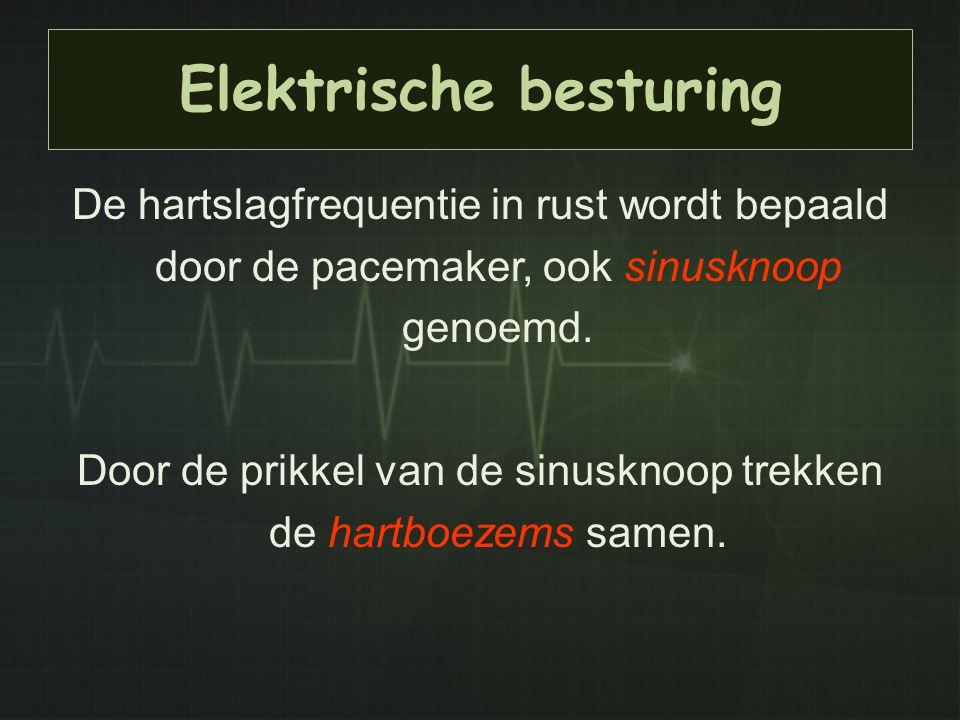 Elektrische besturing De hartslagfrequentie in rust wordt bepaald door de pacemaker, ook sinusknoop genoemd. Door de prikkel van de sinusknoop trekken