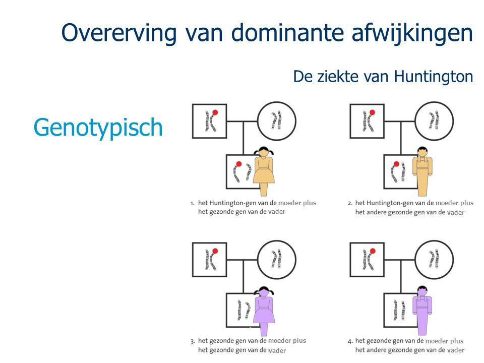 Overerving van dominante afwijkingen De ziekte van Huntington Genotypisch vader moeder plus vader moeder plus vader moeder plus