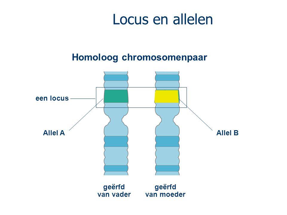 Locus en allelen geërfd van vader Homoloog chromosomenpaar geërfd van moeder een locus Allel AAllel B