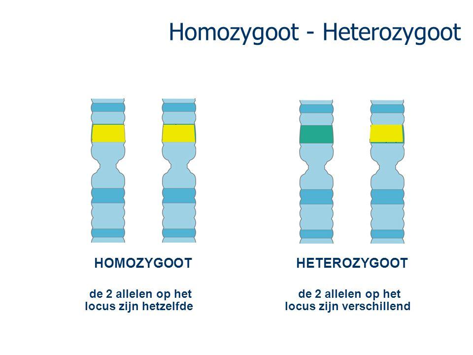 Homozygoot - Heterozygoot de 2 allelen op het locus zijn hetzelfde HOMOZYGOOT de 2 allelen op het locus zijn verschillend HETEROZYGOOT