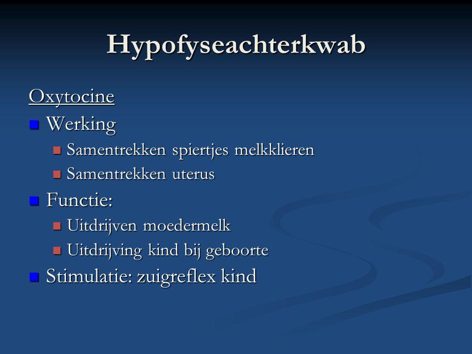 Hypofyseachterkwab Oxytocine Werking Werking Samentrekken spiertjes melkklieren Samentrekken spiertjes melkklieren Samentrekken uterus Samentrekken ut