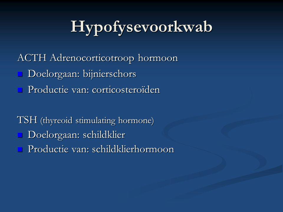 Hypofysevoorkwab FSH= follikelstimulerend hormoon FSH= follikelstimulerend hormoon LH=luteïniserend hormoon LH=luteïniserend hormoon Doelorgaan: ovarium of testes Doelorgaan: ovarium of testes Productie van: progesteron, testosteron Productie van: progesteron, testosteron