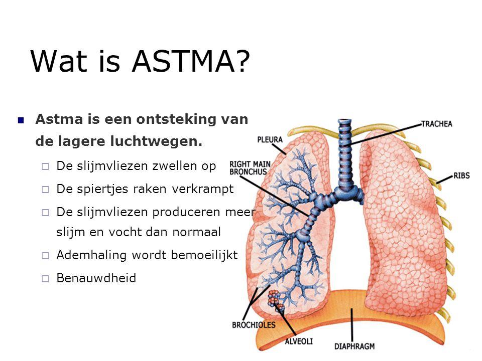 Wat is ASTMA? Astma is een ontsteking van de lagere luchtwegen.  De slijmvliezen zwellen op  De spiertjes raken verkrampt  De slijmvliezen producer