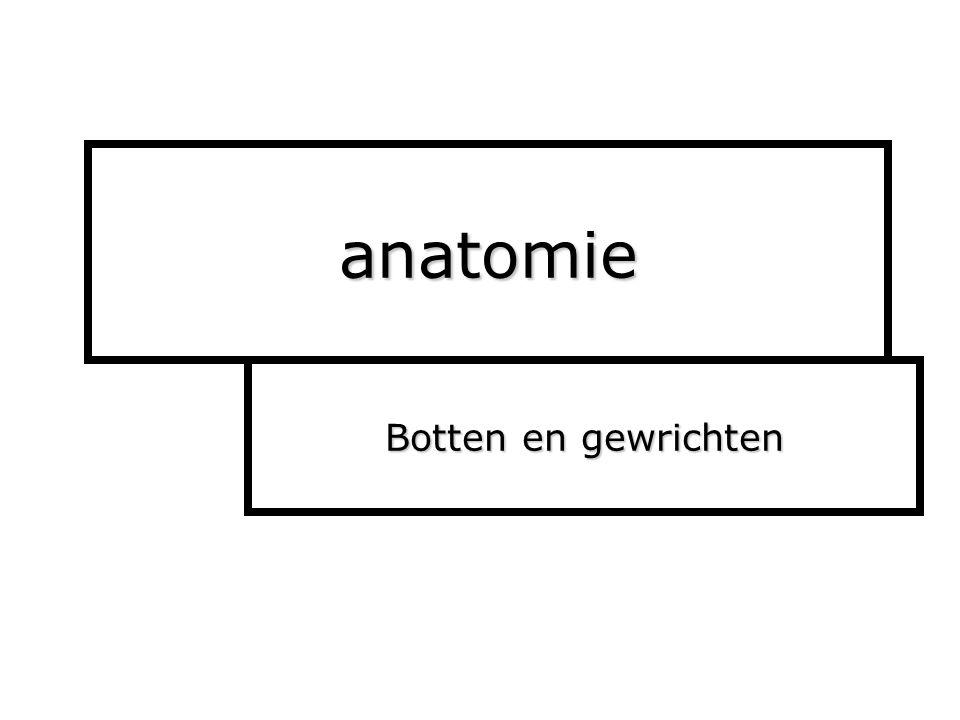 anatomie Botten en gewrichten