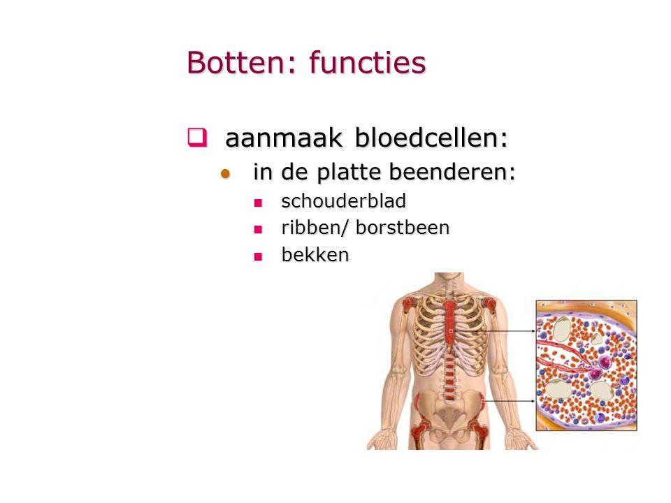 Botten: functies  aanmaak bloedcellen: in de platte beenderen: in de platte beenderen: schouderblad schouderblad ribben/ borstbeen ribben/ borstbeen