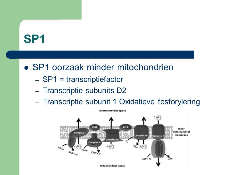 SP1 SP1 oorzaak minder mitochondrien – SP1 = transcriptiefactor – Transcriptie subunits D2 – Transcriptie subunit 1 Oxidatieve fosforylering