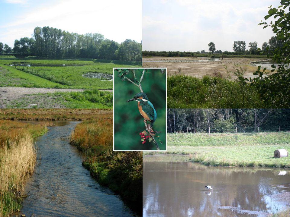 Departement Leefmilieu Dienst Waterbeleid19 april 2010
