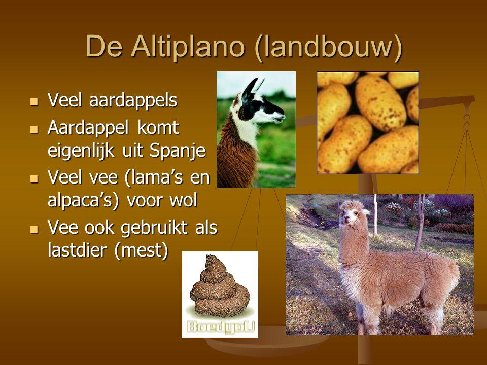 De Altiplano (landbouw) Veel aardappels Veel aardappels Aardappel komt eigenlijk uit Spanje Aardappel komt eigenlijk uit Spanje Veel vee (lama's en al