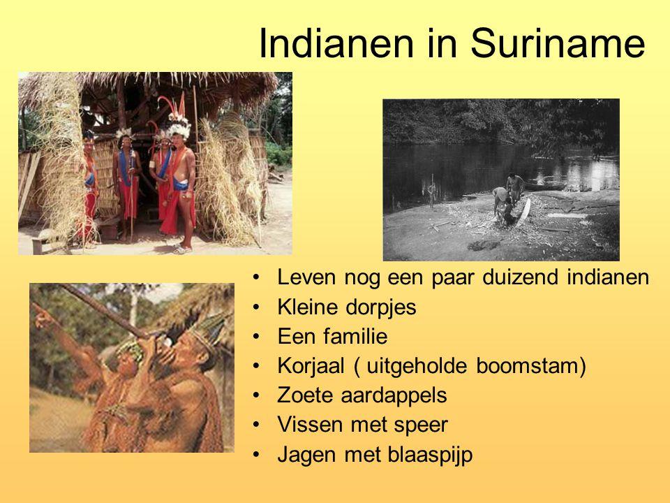Indianen in Suriname Leven nog een paar duizend indianen Kleine dorpjes Een familie Korjaal ( uitgeholde boomstam) Zoete aardappels Vissen met speer J