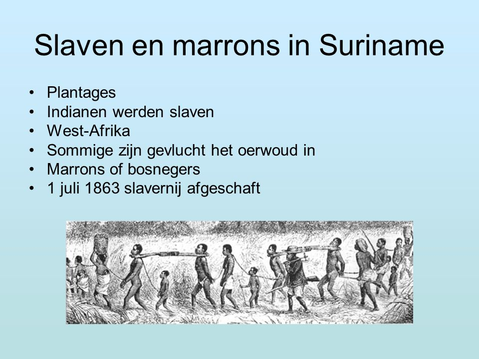 Slaven en marrons in Suriname Plantages Indianen werden slaven West-Afrika Sommige zijn gevlucht het oerwoud in Marrons of bosnegers 1 juli 1863 slave