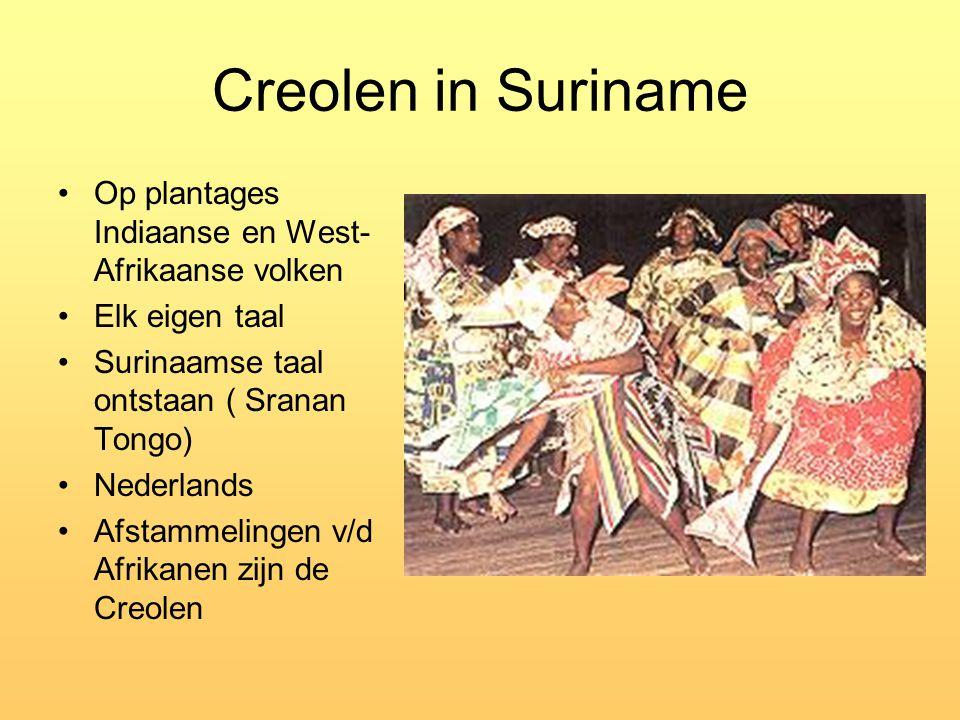 Creolen in Suriname Op plantages Indiaanse en West- Afrikaanse volken Elk eigen taal Surinaamse taal ontstaan ( Sranan Tongo) Nederlands Afstammelinge