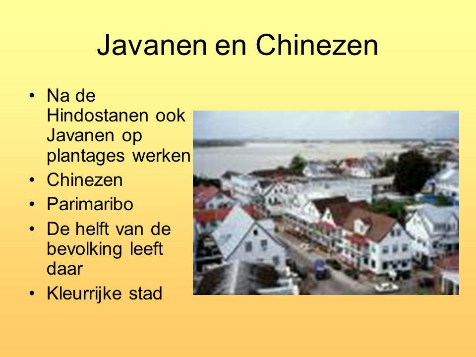 Javanen en Chinezen Na de Hindostanen ook Javanen op plantages werken Chinezen Parimaribo De helft van de bevolking leeft daar Kleurrijke stad