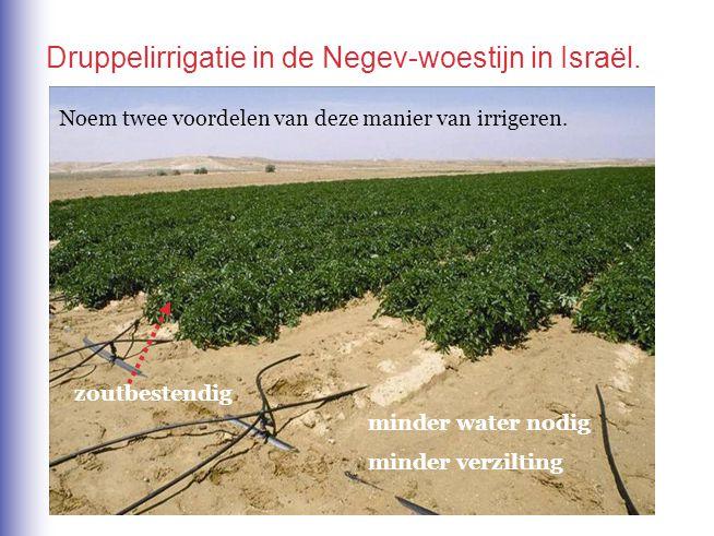 minder water nodig minder verzilting zoutbestendig Noem twee voordelen van deze manier van irrigeren. Druppelirrigatie in de Negev-woestijn in Israël.