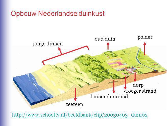 zeereep jonge duinen binnenduinrand oud duin polder vroeger strand dorp http://www.schooltv.nl/beeldbank/clip/20030403_duin02 Opbouw Nederlandse duinkust
