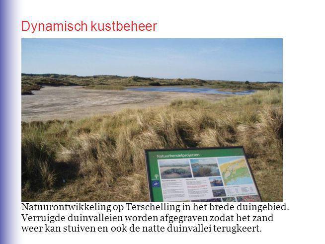 Natuurontwikkeling op Terschelling in het brede duingebied.