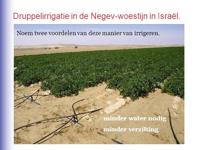 minder water nodig minder verzilting Noem twee voordelen van deze manier van irrigeren. Druppelirrigatie in de Negev-woestijn in Israël.