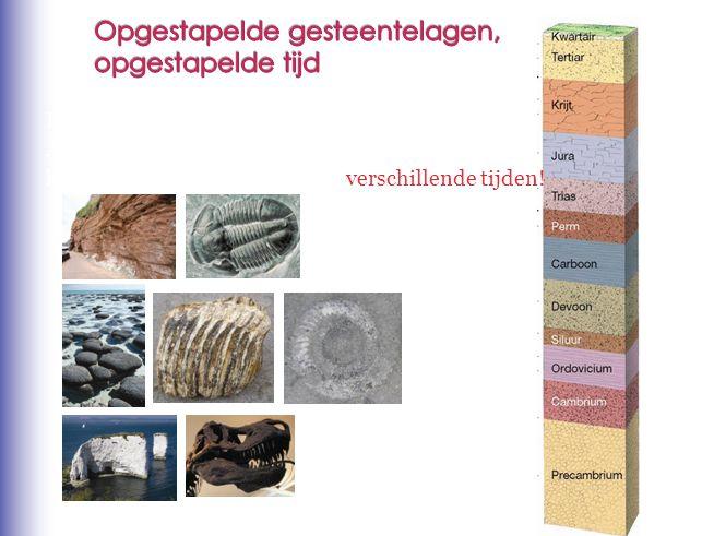 Deze gesteenten en fossielen zijn niet Allemaal tegelijkertijd ontstaan. Ze komen uit verschillende lagen: verschillende tijden!