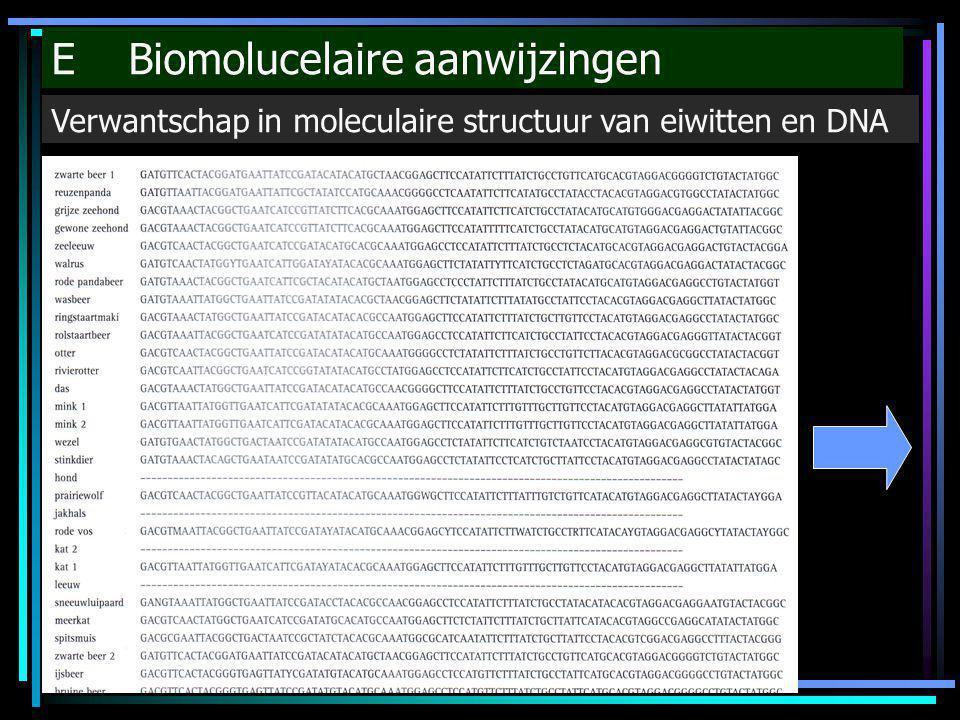 E Biomolucelaire aanwijzingen Verwantschap in moleculaire structuur van eiwitten en DNA