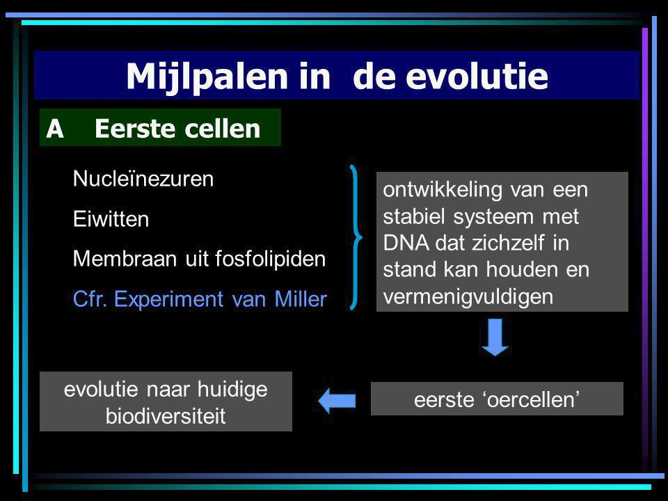Mijlpalen in de evolutie A Eerste cellen Nucleïnezuren Eiwitten Membraan uit fosfolipiden Cfr. Experiment van Miller ontwikkeling van een stabiel syst