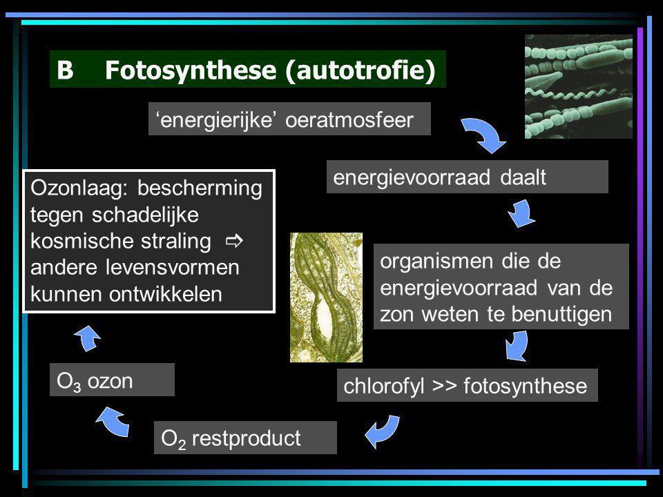 B Fotosynthese (autotrofie) 'energierijke' oeratmosfeer energievoorraad daalt organismen die de energievoorraad van de zon weten te benuttigen chlorof