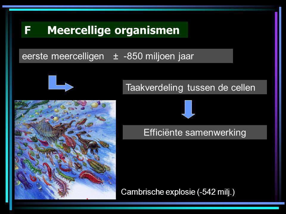 F Meercellige organismen eerste meercelligen ± -850 miljoen jaar Taakverdeling tussen de cellen Efficiënte samenwerking Cambrische explosie (-542 milj