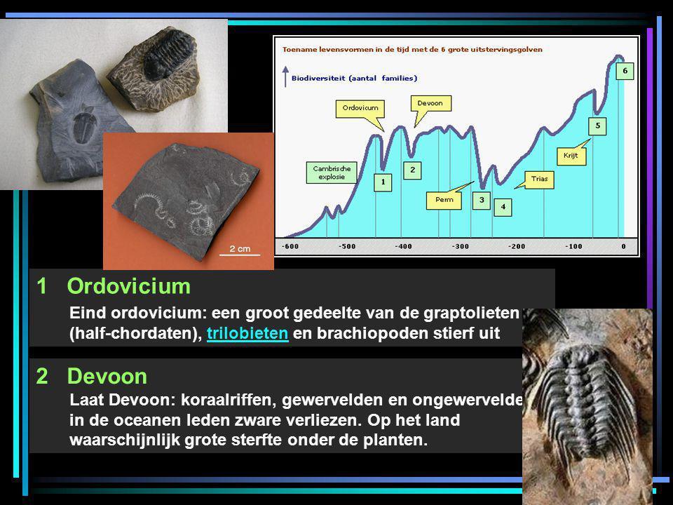 1 Ordovicium Eind ordovicium: een groot gedeelte van de graptolieten (half-chordaten), trilobieten en brachiopoden stierf uittrilobieten 2 Devoon Laat