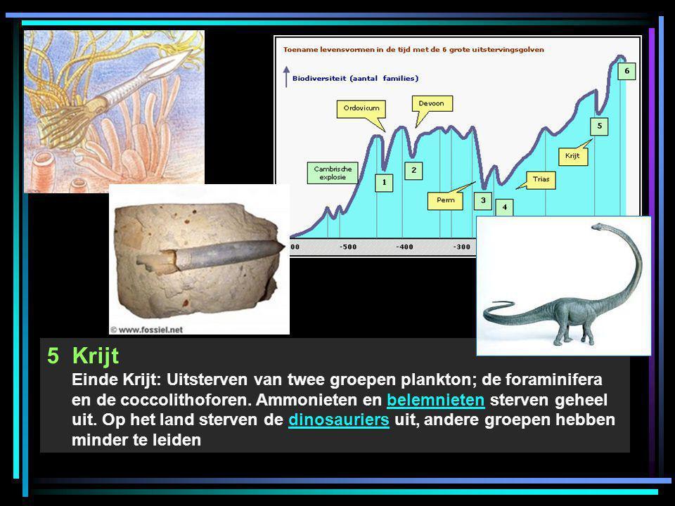 5Krijt Einde Krijt: Uitsterven van twee groepen plankton; de foraminifera en de coccolithoforen. Ammonieten en belemnieten sterven geheel uit. Op het