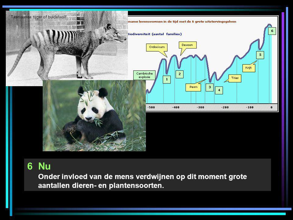 6Nu Onder invloed van de mens verdwijnen op dit moment grote aantallen dieren- en plantensoorten. Tasmaanse tijger of buidelwolf
