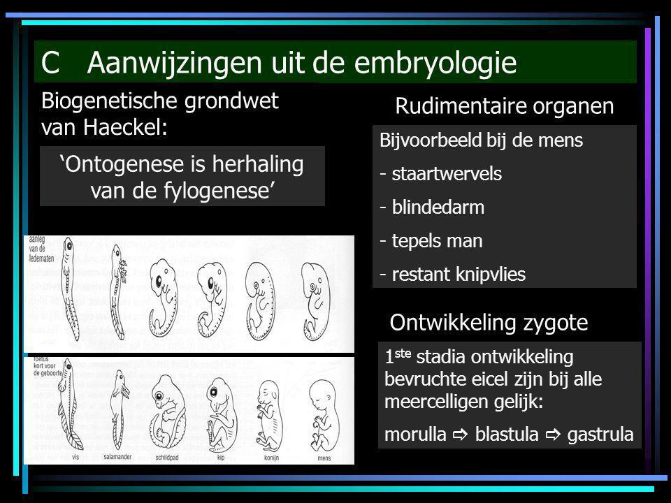C Aanwijzingen uit de embryologie Biogenetische grondwet van Haeckel: 'Ontogenese is herhaling van de fylogenese' Rudimentaire organen Bijvoorbeeld bi