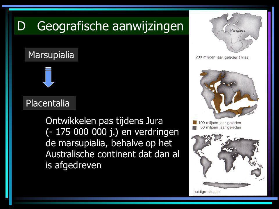 D Geografische aanwijzingen Marsupialia Placentalia Ontwikkelen pas tijdens Jura (- 175 000 000 j.) en verdringen de marsupialia, behalve op het Austr