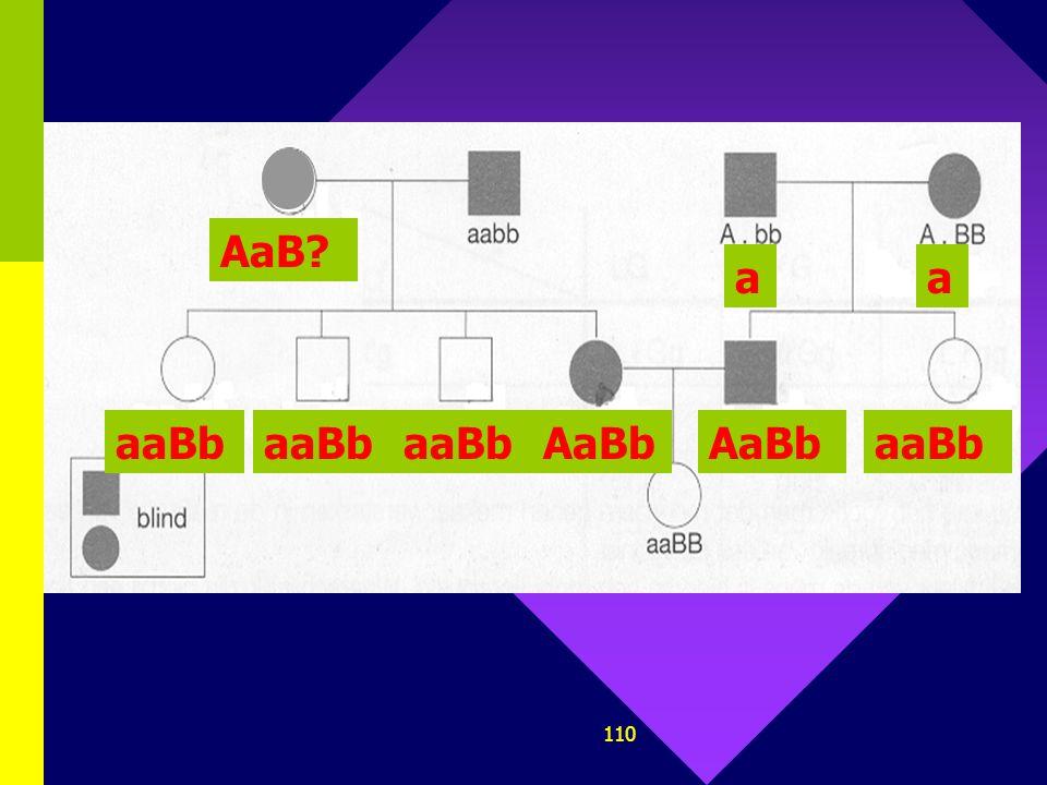 109 3. Bij de mens is de aanwezigheid van een bepaald dominant allel (A) van een bepaald gen verantwoordelijk voor blindheid. De afwezigheid van een d