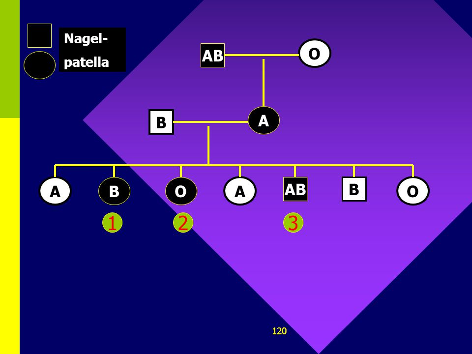 119 1.Op chromosoom 9 bij de mens vinden we het gen dat de ABO-bloedgroep bepaalt. Ook het dominante allel voor het nagelpatella-syndroom kan op dit c
