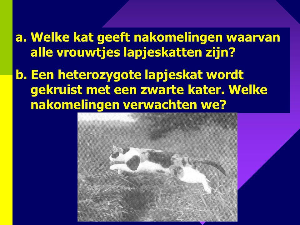 139 4. Bij katten is de kleur geslachtsgebonden. Katers kunnen rood of zwart zijn. Vrouwtjes kunnen rood, zwart of rood-zwart zijn. Naast dit geslacht