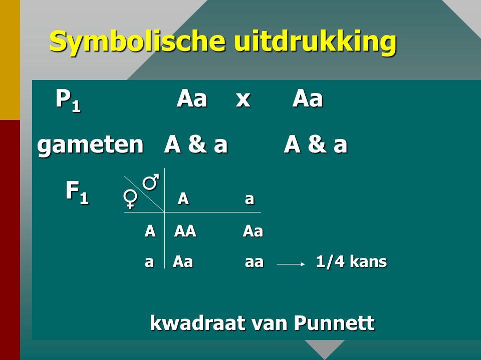 29 C. 2 de Mendelwet : Splitsingswet De nakomelingen van 2 heterozygoten voor één kenmerk hebben 3/4 kans dat het dominante kenmerk van de ouders tot