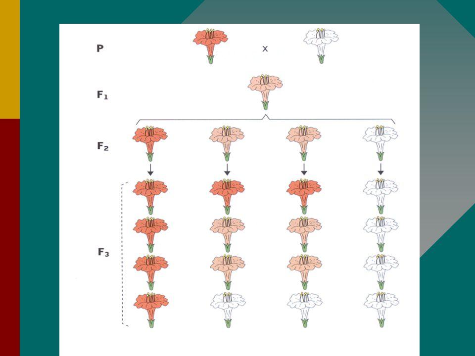 33 Intermediare eigenschappen Als een individu heterozygoot is voor een bepaald kenmerk, maar geen van beide allelen wordt teruggedrongen, geven ze sa