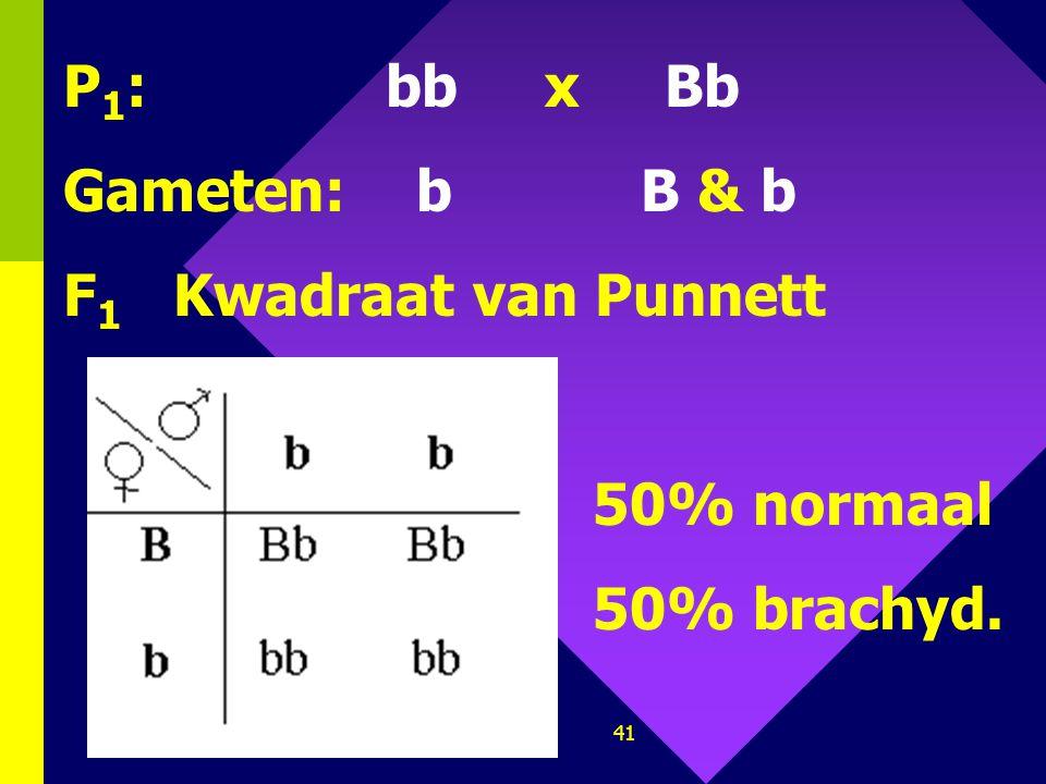 40 1.Bij de mens komt brachydactylie (kortvingerig) voor. Het is een dominante erfelijke afwijking. ♂ ♀ Stel het kruisingsschema op waarbij de ene par