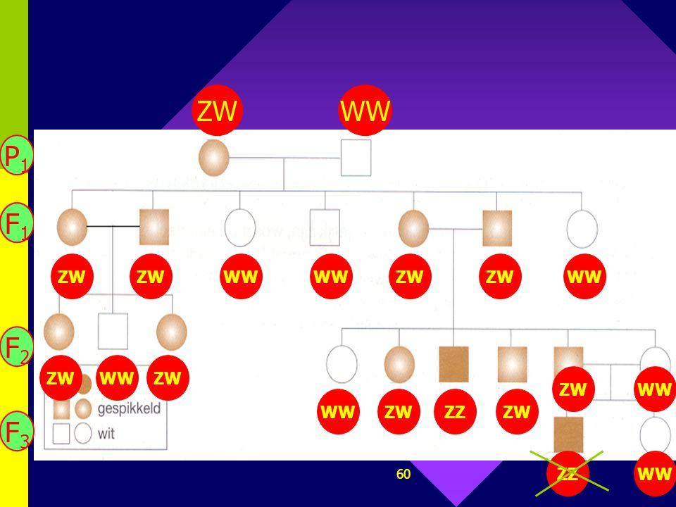 59 9. Stamboom van Andalusische hoenders. Geef de genotypes en zoek de fout! Zwart: ZZ Wit: WW Gesp.: ZW