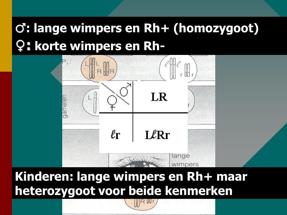 68 Voorbeeld Dihybride kruising resusfactor (Rh+ > R, Rh- > r) resusfactor (Rh+ > R, Rh- > r) wimperlengte (lang > L, kort > l) wimperlengte (lang > L