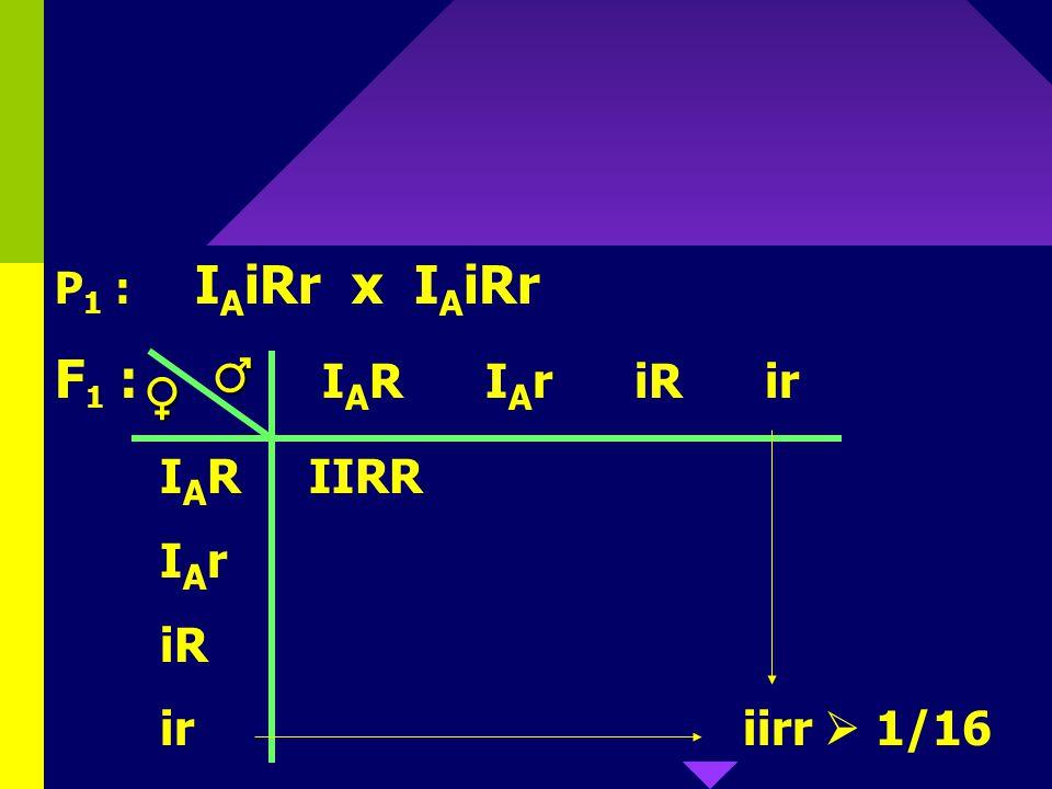 76 Mogelijke genotypen bij ouders die A Rh+ zijn: I A I A RR, I A I A Rr, I A iRR, I A iRr Kind moet O Rh- zijn; dus iirr Dat kan enkel als beide oude