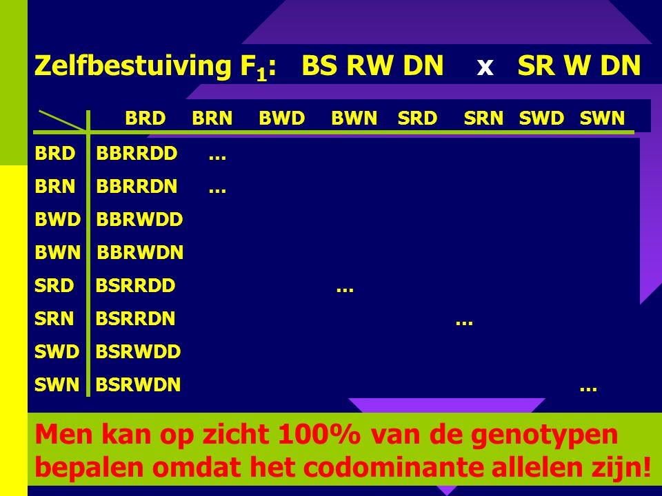 96 P 1 : breed smal roodXwit diep niet ingesneden Codominantie voor de 3 kenmerken!! BB RR DD X SS WW NN BS RW DN