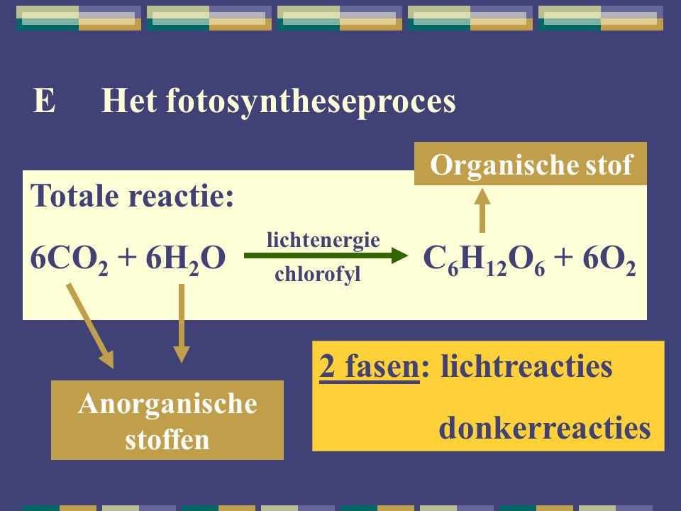 E Het fotosyntheseproces Totale reactie: 6CO 2 + 6H 2 O C 6 H 12 O 6 + 6O 2 lichtenergie chlorofyl Anorganische stoffen Organische stof 2 fasen: licht
