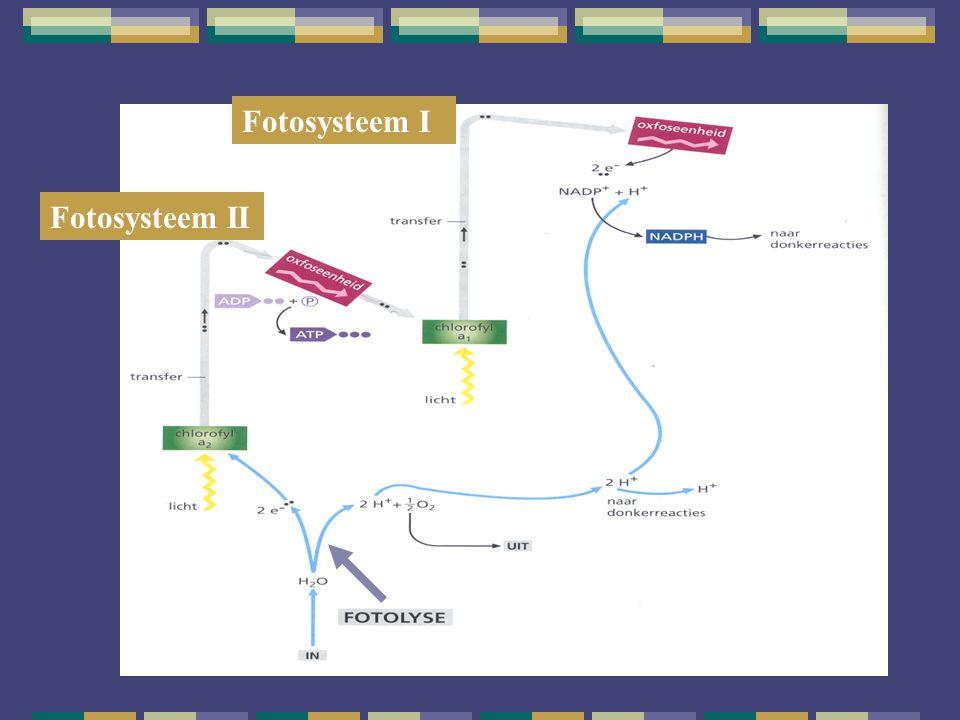 Fotosysteem II Fotosysteem I