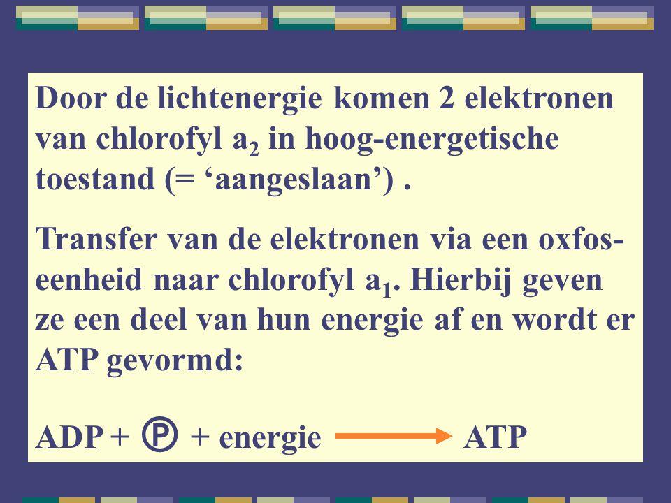 Door de lichtenergie komen 2 elektronen van chlorofyl a 2 in hoog-energetische toestand (= 'aangeslaan'). Transfer van de elektronen via een oxfos- ee