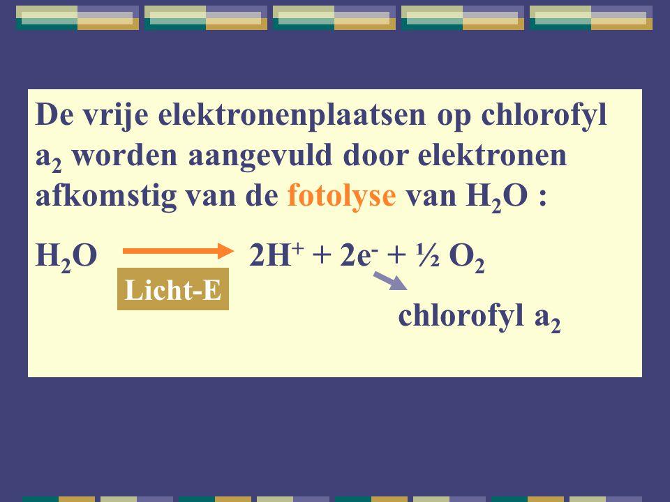 De vrije elektronenplaatsen op chlorofyl a 2 worden aangevuld door elektronen afkomstig van de fotolyse van H 2 O : H 2 O 2H + + 2e - + ½ O 2 chlorofy
