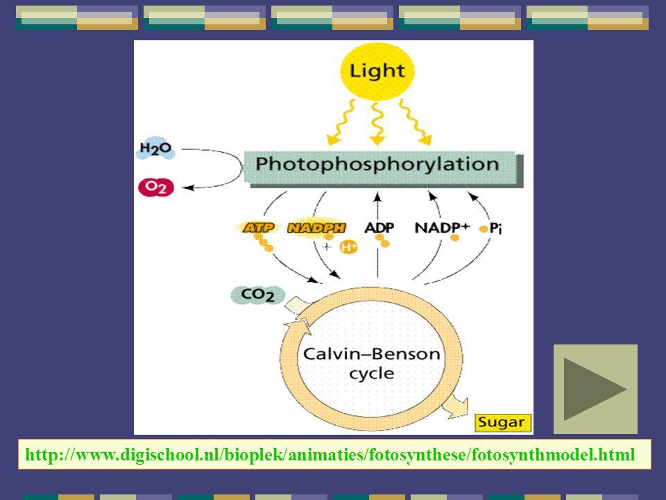 http://www.digischool.nl/bioplek/animaties/fotosynthese/fotosynthmodel.html