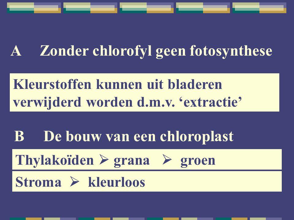 AZonder chlorofyl geen fotosynthese Kleurstoffen kunnen uit bladeren verwijderd worden d.m.v. 'extractie' BDe bouw van een chloroplast Thylakoïden  g