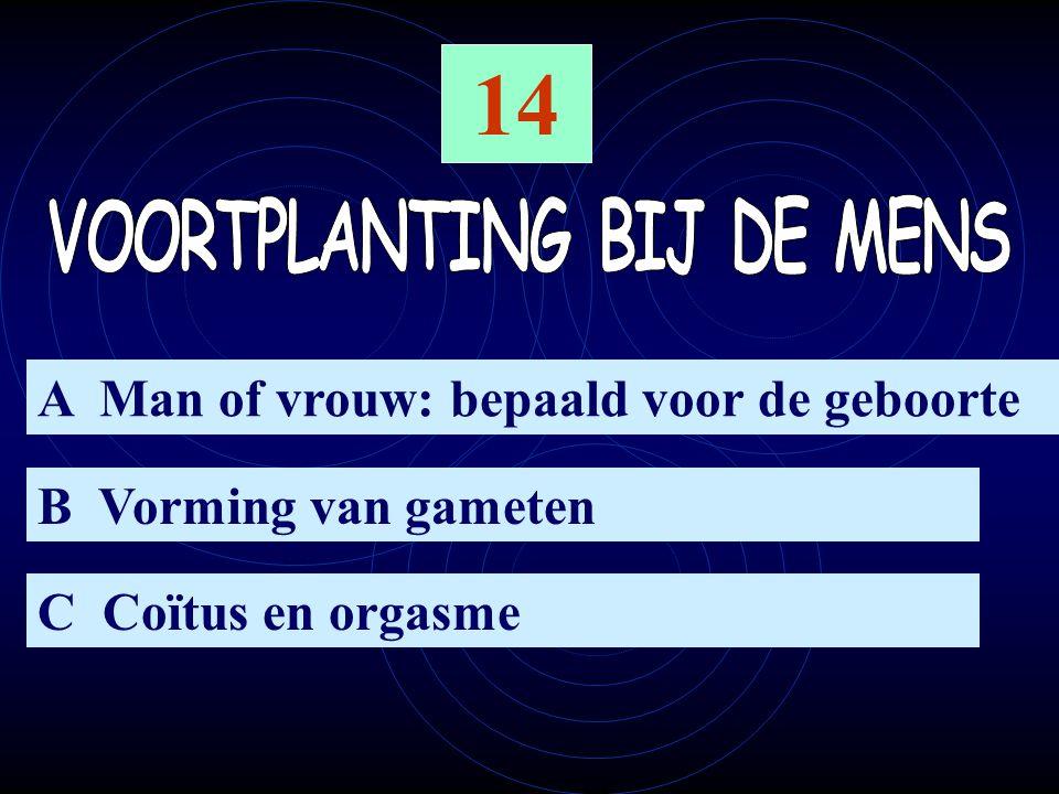14 A Man of vrouw: bepaald voor de geboorte B Vorming van gameten C Coïtus en orgasme