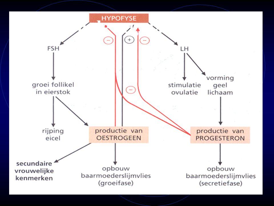 Hormonale regulatie ♀ cyclus