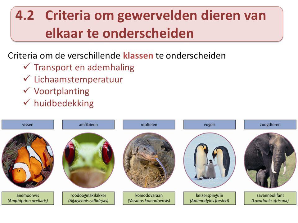 4.2Criteria om gewervelden dieren van elkaar te onderscheiden Criteria om de verschillende klassen te onderscheiden Transport en ademhaling Lichaamste